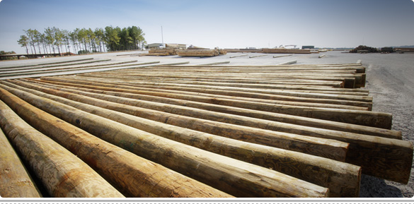 Wood Power Poles Sizes : Large variety of sizes cahaba timber